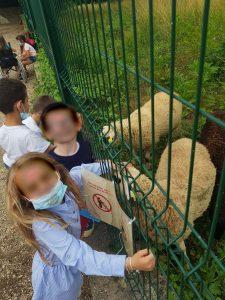 Visite aux voisins ovins